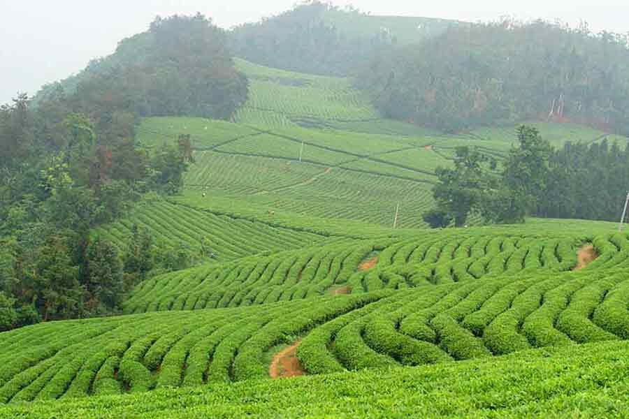 Декларация соответствия на чай