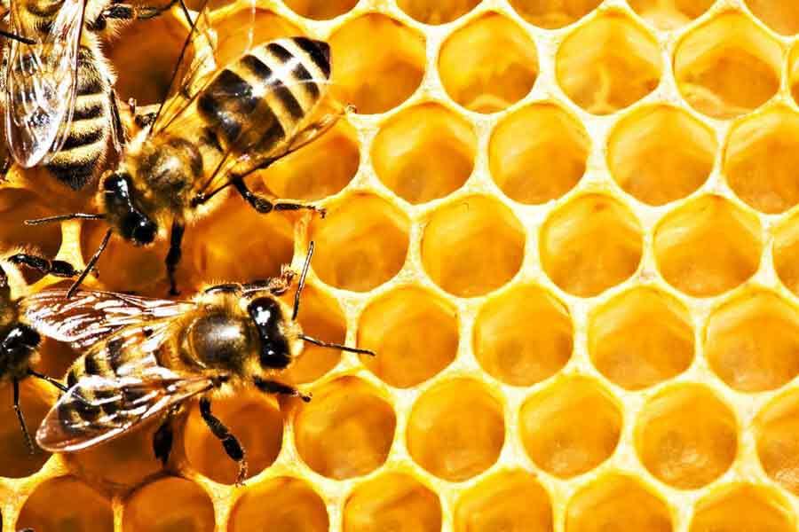 Декларация соответствия на мед