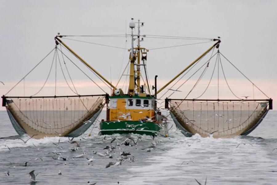 Декларация соответствия на морепродукты