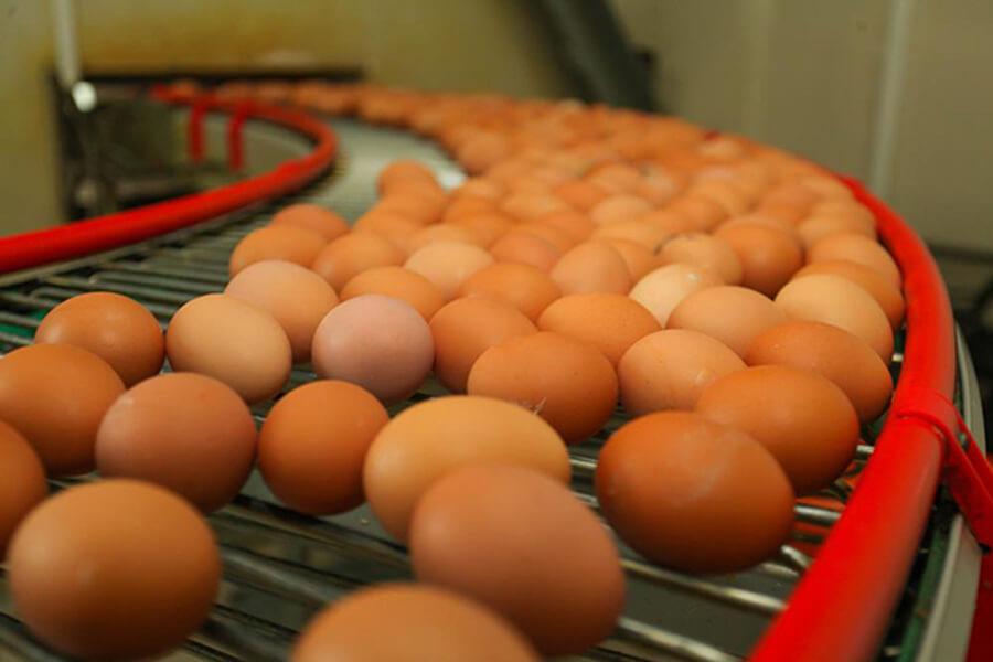 Декларация соответствия на яицо