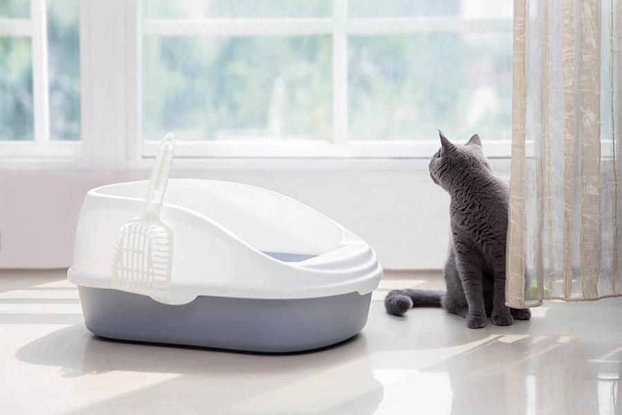 Сертификация наполнителя для кошачьих туалетов